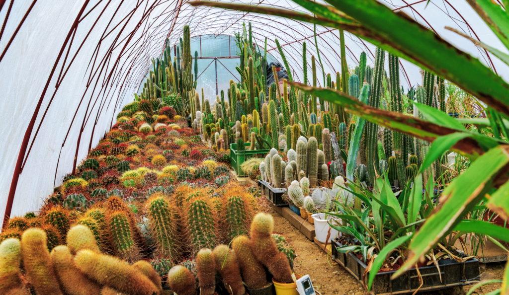 Kaktusy w Ostrzycach